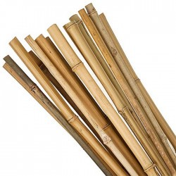 BAMBOO Cane 4FT 10 Pack | 421889